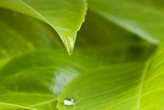 Waterdrop van blad Stock Fotografie