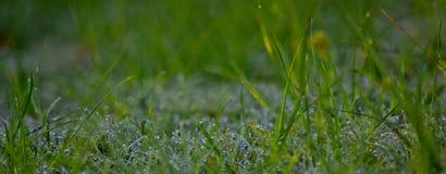 Waterdroplets fotografia stock