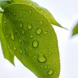 Waterdroplets on green leaf Stock Photos