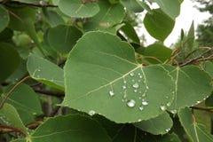 Waterdroplets na liściach Fotografia Royalty Free