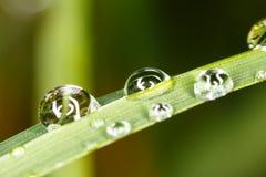 Waterdrops στη χλόη Στοκ Εικόνες