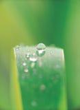 waterdrops тени Стоковое Фото