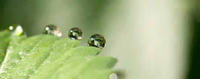 Waterdrops. On a green leave Royalty Free Stock Image