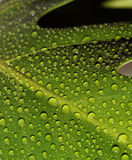 Waterdrops Stock Photos