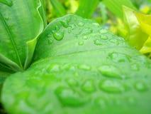 Waterdrops Stockfoto