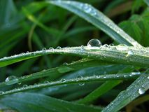 Waterdrops Стоковое Изображение RF
