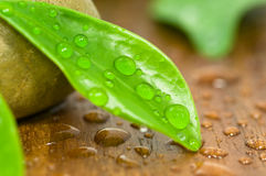 Waterdrops. On fresh green leaf royalty free stock images