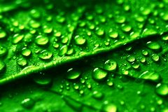 Waterdrops. On green plant leaf macro royalty free stock photo