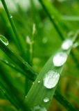 waterdrops Fotografia Royalty Free