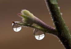 waterdrops Royaltyfria Foton