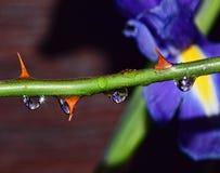 Waterdrops Zdjęcie Stock