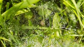 Waterdrops Fotos de archivo libres de regalías
