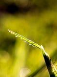 Waterdrops auf einem Gras Stockbilder