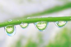 Waterdrops auf einer Anlage Lizenzfreies Stockfoto