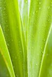 Waterdrops auf grünen Blättern Lizenzfreie Stockbilder