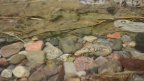 Waterdrops che cade sulla superficie calma della pozza dell'acqua stock footage