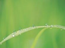 Waterdrops con la natura Immagini Stock Libere da Diritti