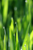 Waterdrops de matin sur une herbe photographie stock