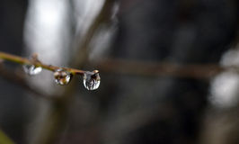 Waterdrops della rugiada di mattina Fotografia Stock