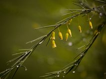 Waterdrops efter regn royaltyfri bild