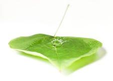Waterdrops in einem Blatt Lizenzfreie Stockfotografie