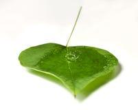 Waterdrops in einem Blatt Stockfotografie