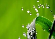 Waterdrops en la cuchilla de la hierba Fotografía de archivo