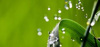 Waterdrops en la cuchilla de la hierba Imágenes de archivo libres de regalías