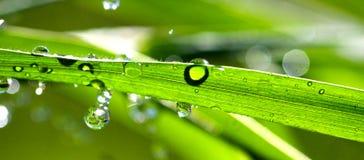 Waterdrops en la cuchilla de la hierba Fotografía de archivo libre de regalías