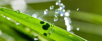 Waterdrops en la cuchilla de la hierba Imagenes de archivo