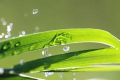 Waterdrops en la cuchilla de la hierba Imagen de archivo