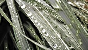 Waterdrops en la hierba Imagenes de archivo