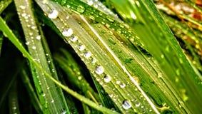 Waterdrops en la hierba Foto de archivo libre de regalías