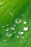 Waterdrops en la hoja Fotos de archivo