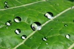 Waterdrops en la hoja Imagen de archivo libre de regalías