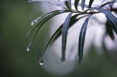 Waterdrops en la hoja Foto de archivo
