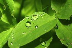 Waterdrops en la planta Imágenes de archivo libres de regalías