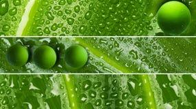 Waterdrops en la textura de la hoja - banderas Foto de archivo