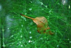 Waterdrops en los verdes Fotografía de archivo