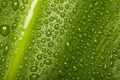 Waterdrops en textura de la hoja Foto de archivo libre de regalías