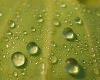 Waterdrops en una hoja Foto de archivo libre de regalías