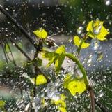 Waterdrops en una uva se va Fotos de archivo