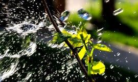 Waterdrops en una uva se va Foto de archivo