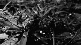 Waterdrops. On grass royalty free stock photos