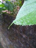 Waterdrops i liść fotografia stock