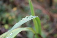 Waterdrops. On a leaf Stock Images