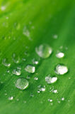 Waterdrops on leaf Stock Photos