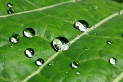 Waterdrops on leaf royalty free stock image