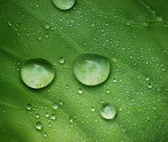 Waterdrops on a leaf. Water drops on a leaf in the morning Stock Photo