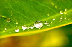 Waterdrops on leaf. Macro of water drops on leaf Stock Photography